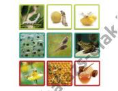Maxi fényképkártya - A természet fejlődése