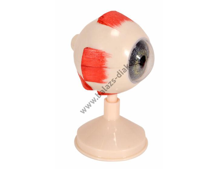 Emberi szem, 3:1 méretű, 6 db-os
