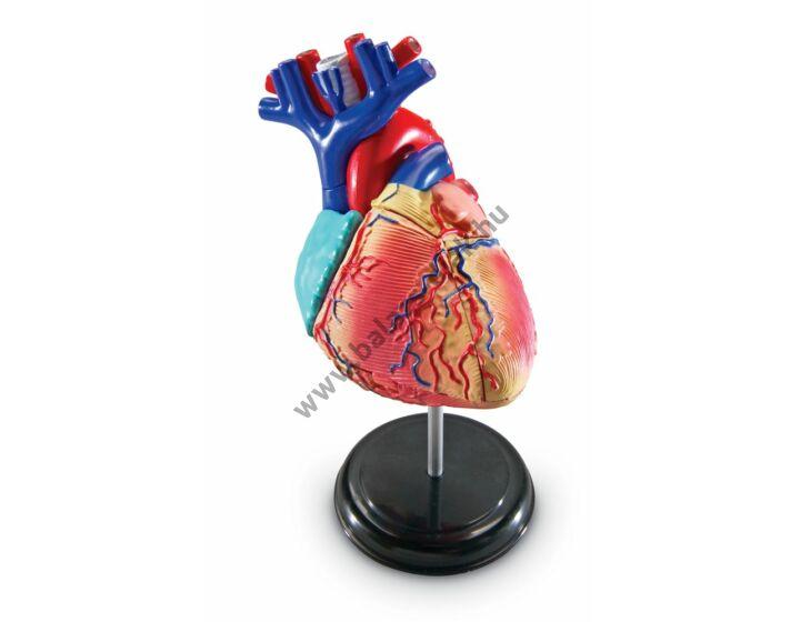 Anatómiai modell szív 29 részes (12,7cm)